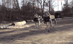 Googleの開発した犬型ロボットに感動!ロボットと暮らす未来はそう遠くない?