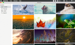 Splashify – 厳選された美しい画像一覧を検索! 壁紙を選んでMacのデスクトップ背景に設定できる